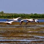 Delta Dunării, o poveste care trebuie trăită