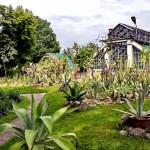 Prin grădina botanică din Cluj