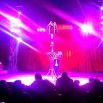 Directorul de circ care a readus aplauzele sub cupolă!