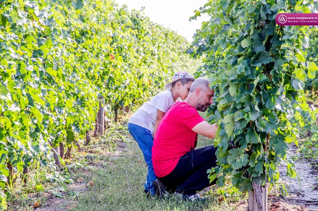 17-Vinul-Alira-merglamare
