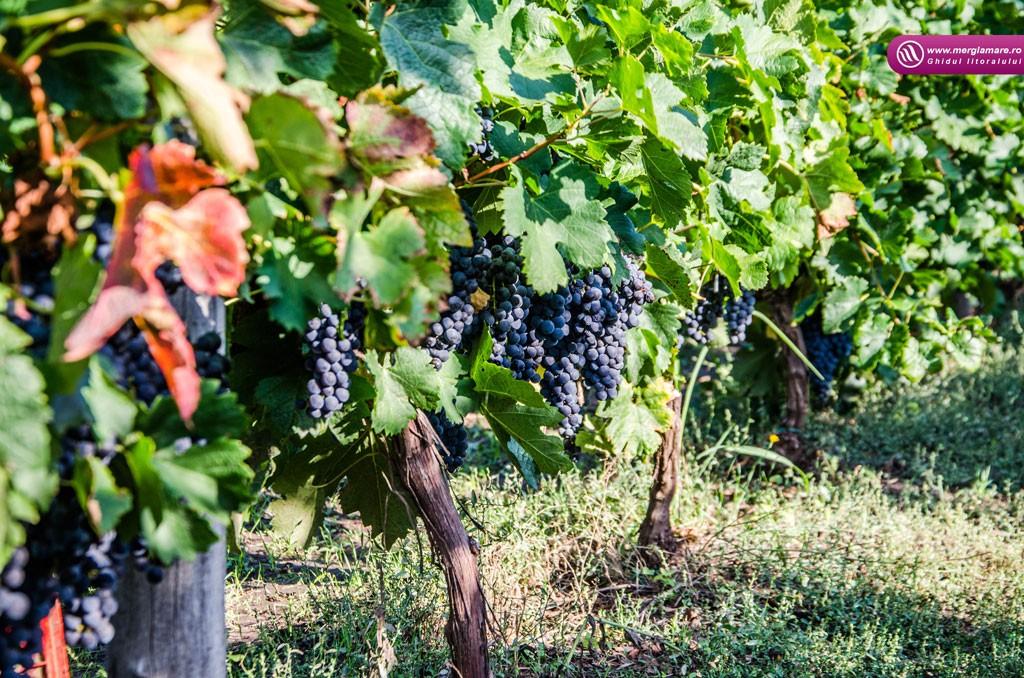 3-Vinul-Alira-merglamare