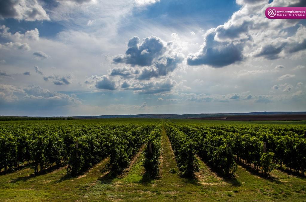 8-Vinul-Alira-merglamare