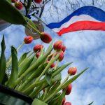 Olanda în simboluri: laleaua, regina florilor de primăvară